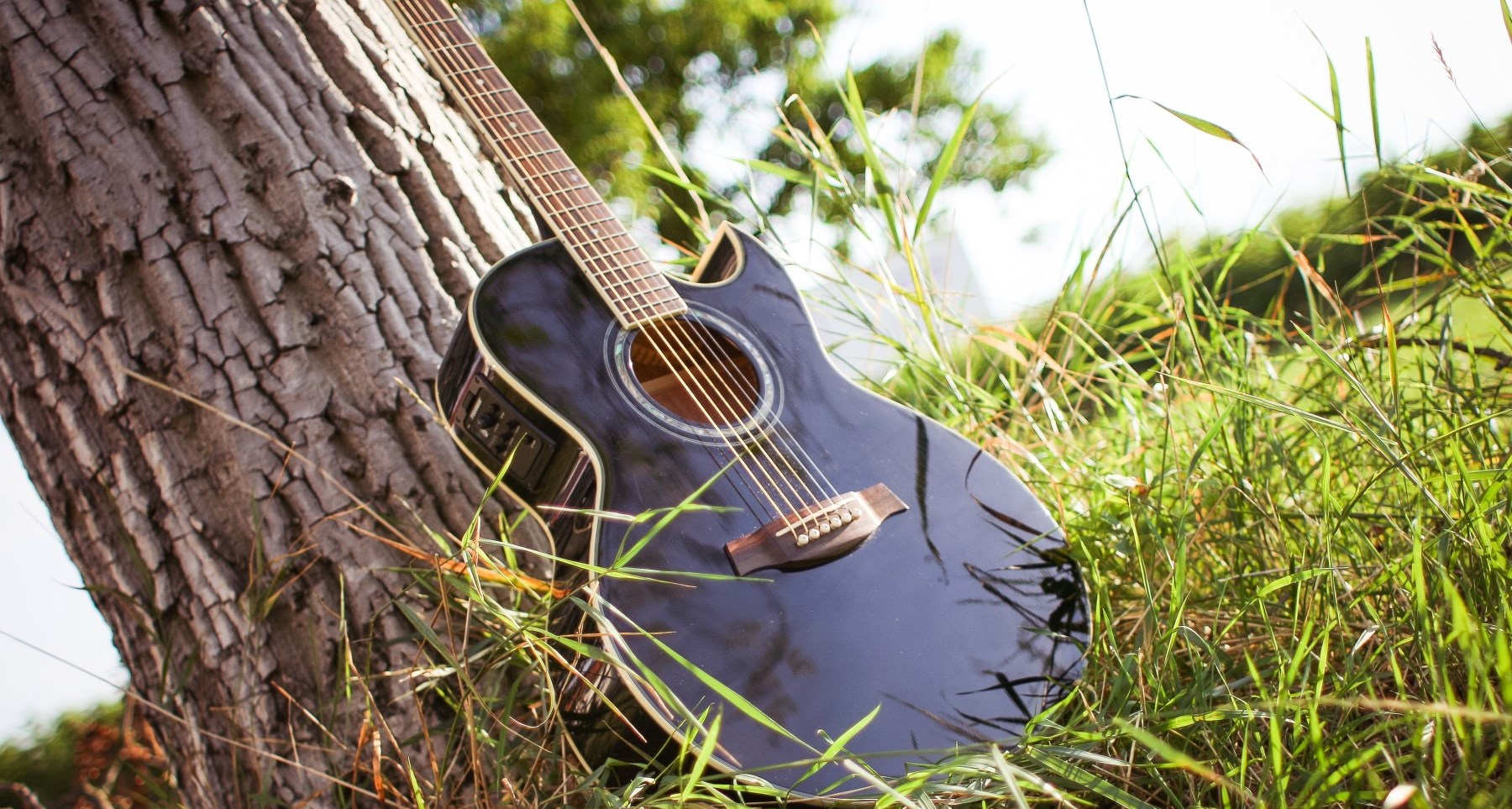 Guitar leaning against tree